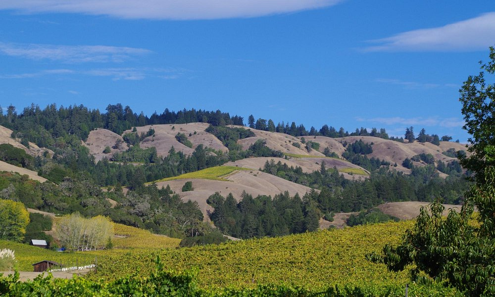 the northern hills of Anderson Valley
