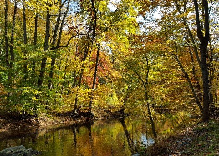 Fall at Ridley Creek