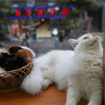 more cute cats