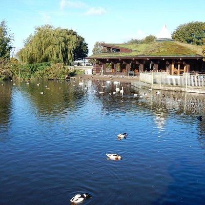 Swan Lake,Martin Mere Wetland Centre.