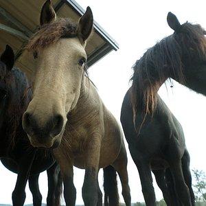 Nella proprità ci sono anche alcuni cavalli