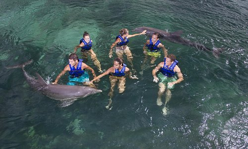 Awesomeness with dolphins at Delphinus Xel-Ha