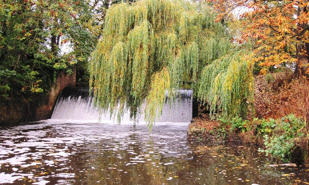 Weeping Willows and Waterfalls - Riverside Park Sidmouth (29/Oct/15).
