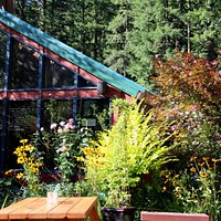 Outdoor seating; near forest