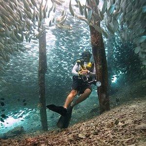 Dive with Papua Scuba