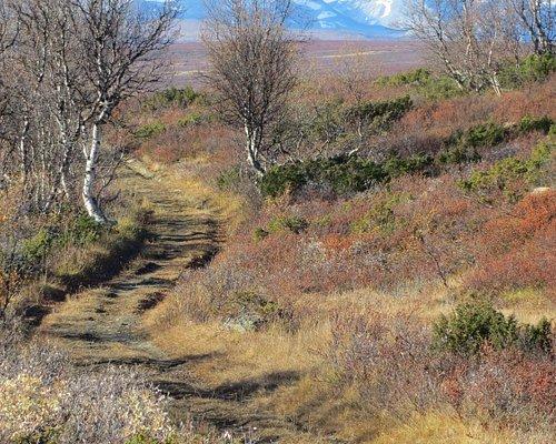 Trail near Gronbakken, e6 south of Oppdal