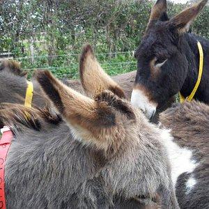 The gorgeous donkeys