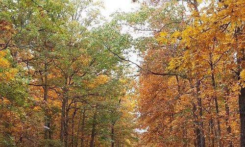 Autumn drive to Chinn Ridge at Manassas Battlefield