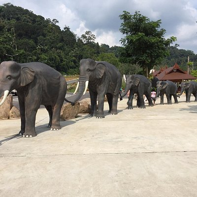 Walk along these elephants and stretch-up.