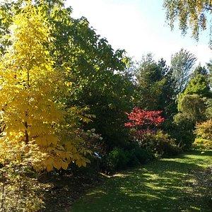 Autumn colour in the gardens
