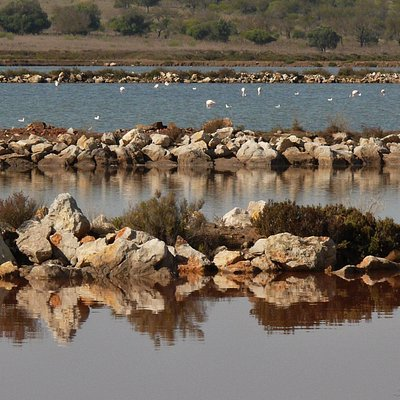 Reserva Natural do Sapal de Castro Marim e Vila Real de Stº António