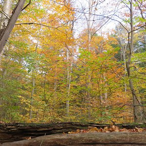 Bat Lake Trail Oct 20 - © GN