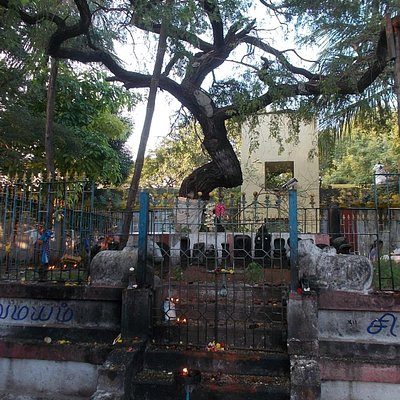 The tree on the temple grounds (people circle around it so must have some religious significance