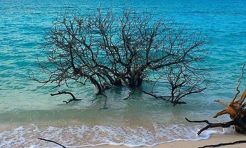 Pearl Beach View