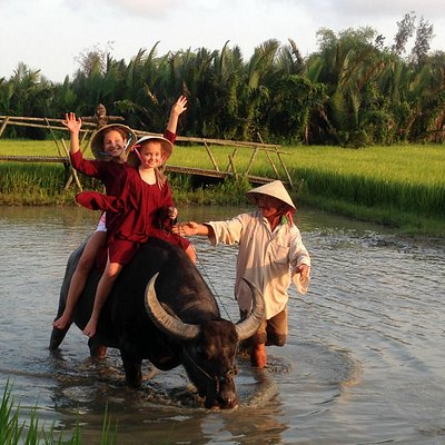 Welcome to Vietnam with Jack Tran's buffalo