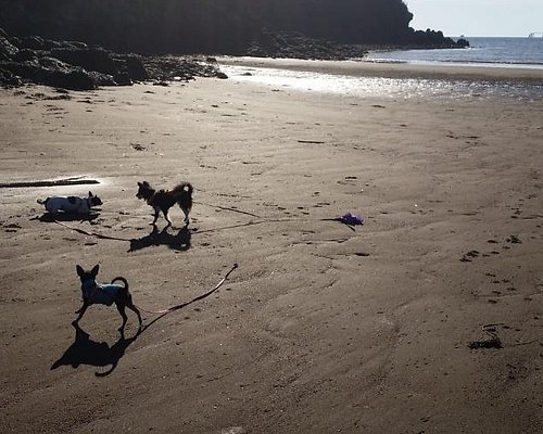 Puppy Playtime - Nov Fall afternoon at Mispec Beach!