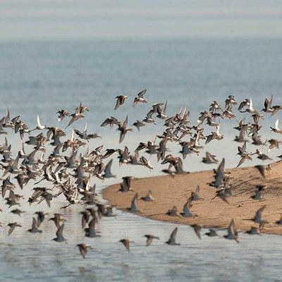 Sado Estuary Natural Reserve