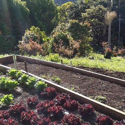 Our new terrace garden beds