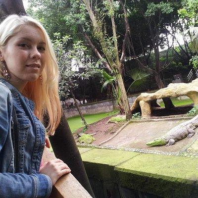 crocodile in the back