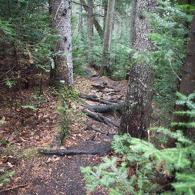 Old Railway Bike Trail