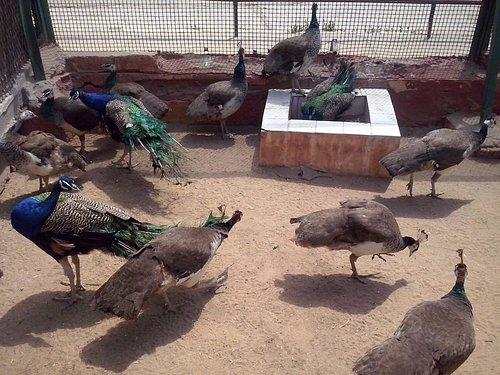 Alexandria Zoo