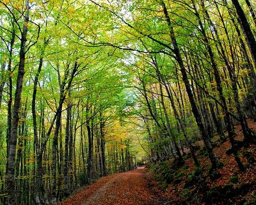 Bosques otoñales