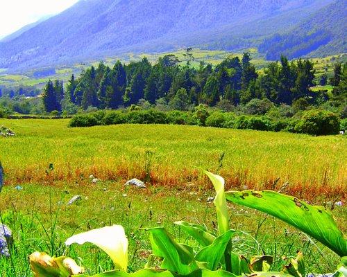 campo de trigo en la culata