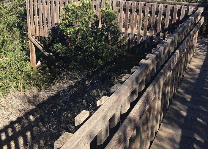 Interpretative boardwalk