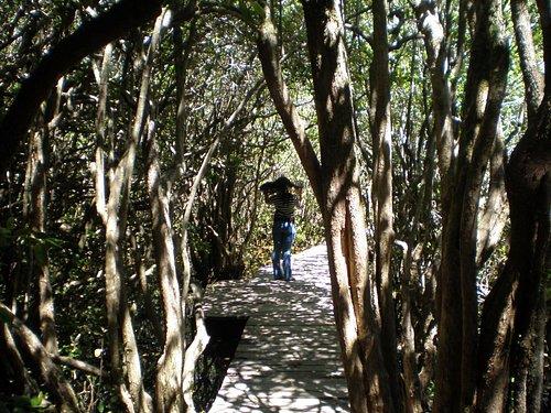 Sendero Bosque de las Sombras