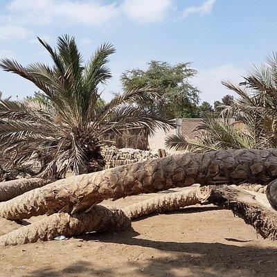 Vista da palmeira