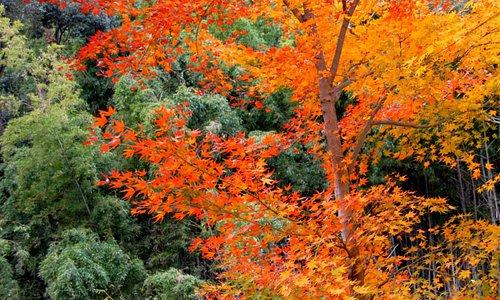 大門寺の紅葉