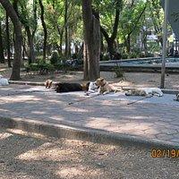 Dog walkers Parque Espana