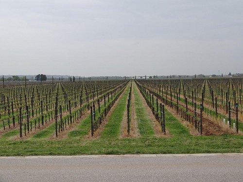 Weingut Franco Toros