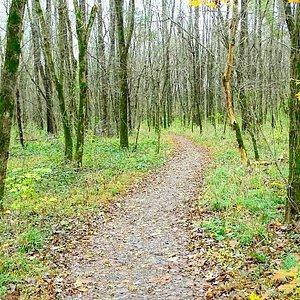 bottoms trail