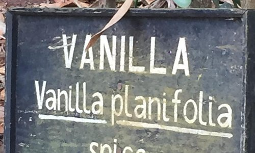 Vanilla / Baunilha
