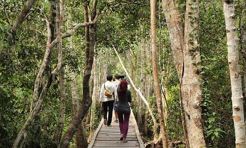 On our way to the last feeding spot of Orangutan