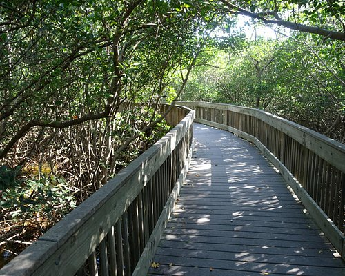 A typical boardwalk in the mangrove area