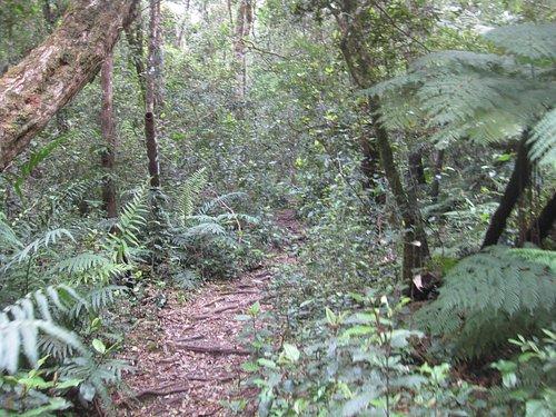 jubilee creek short walk