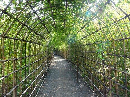 萩のトンネルです。
