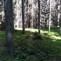 Sunlit forest.