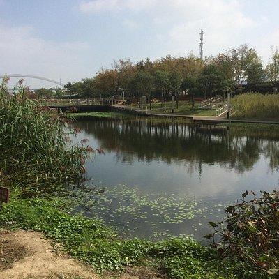 Predominantly native flora, swamps and lake