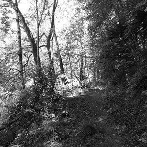trail from Krimula estate along the Guaja river
