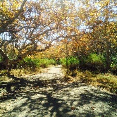 Sullivan Canyon, November 21, 2015 @10am