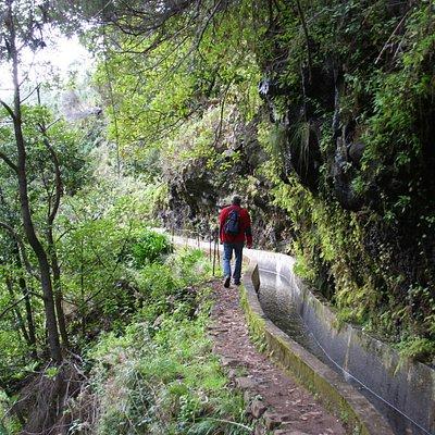 Levada Nova | Prazeres, Madeira