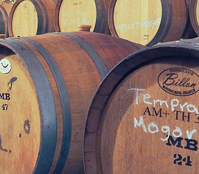 Wine Barrels in the Cellar, Vinicola Mogor Badan