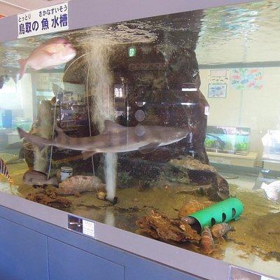 多くの魚が見られる水槽