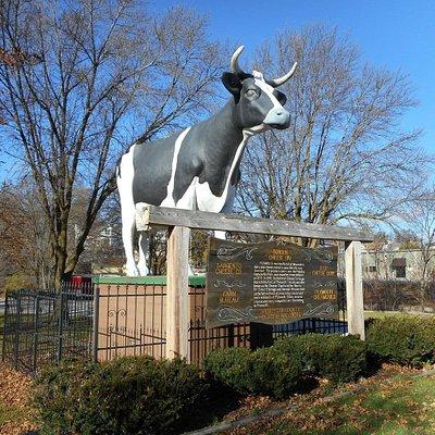 Antoinette the huge Holstein Cow