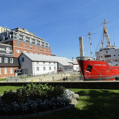 the museum and museumship
