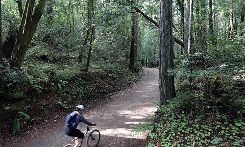 Biking in the Santa Cruz Mountains - Photo courtesy of Visit Santa Cruz