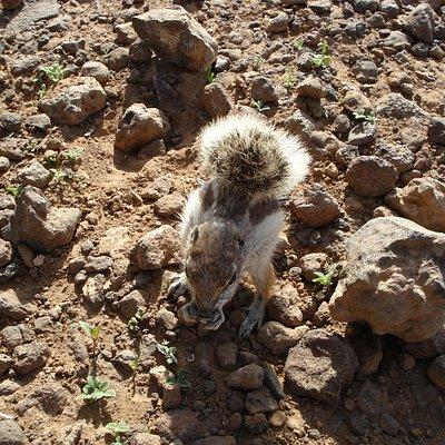 Squirls at the vulcano